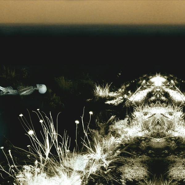 Michel Faber & Andrew Liles – Ohrwurm